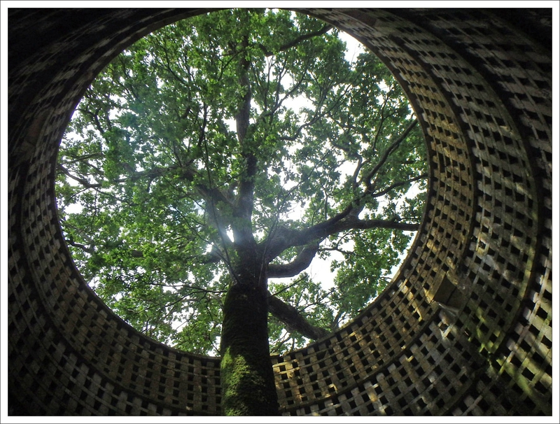 Pouzay pigeonnier intérieur arbre 110616 3