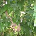 les arbres de la cour 006