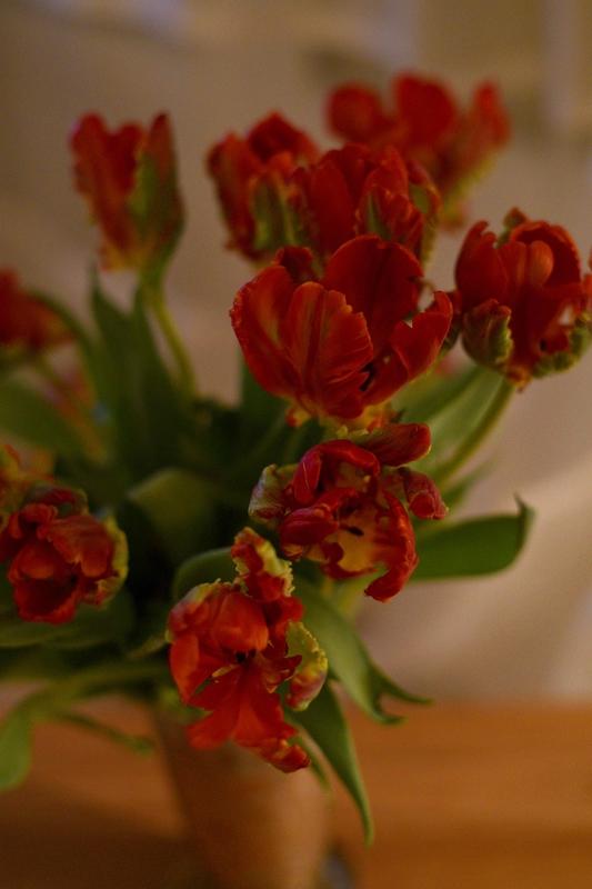 tulipes rouges - 1