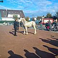 Concours de poulains - marquise 2013