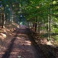 2009 09 24 Un chemin en sous bois