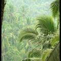 sous la pluie, vallée de la Sungai Ayung