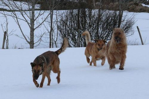 2009 03 11 Les chiens qui courent dans la neige
