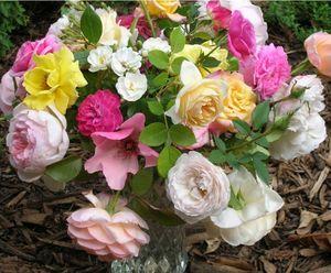 fleurs_coupees_roses_0