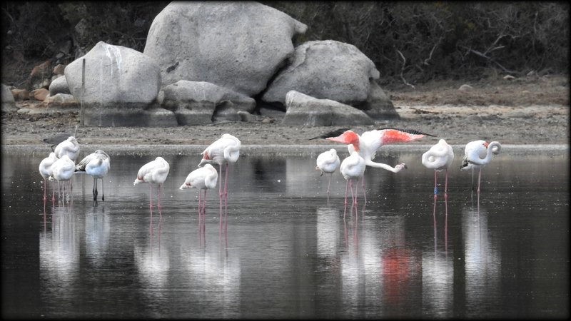 FLAMANDS_ROSES__ESCALE_INSULAIRE_01_