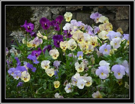 2010_06_01_Mes_pens_es_en_fleurs