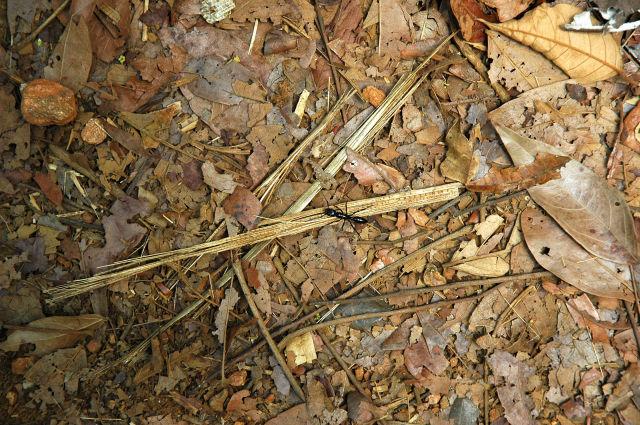 Grosse fourmi