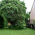 Coté maison coté balcon sur chenil