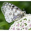 Carte_Parnassius_apollo2_020811