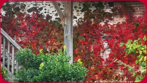 Feuillages automne 041015