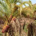 Seckasysteme-Mauritaniemauritania%202007%20054_jpg_rs