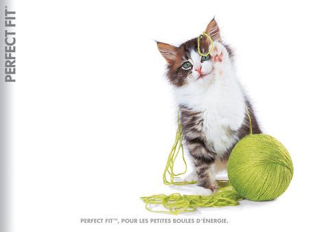 cat_f_wallpapers1024x768H