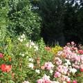 C'est un jardin extraordinaire