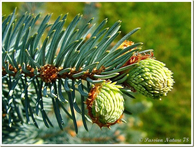 Les premiers bourgeons du jardin (19)