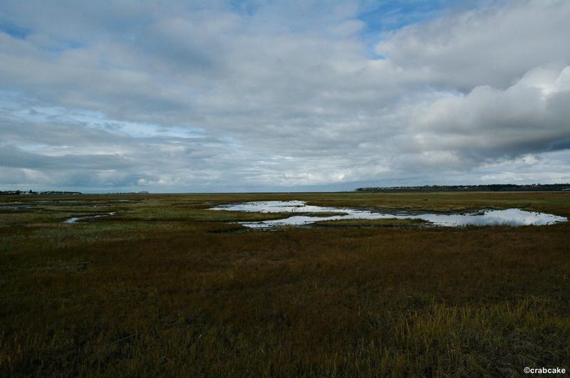 Kenai River Estuary