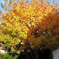:: automne ::