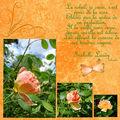 Le soleil et la rose