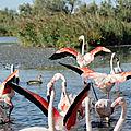 Les étangs de camargue : au pays des flamants roses
