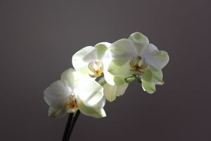 orchidees_lumiere (1)