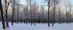 winterwonder_21