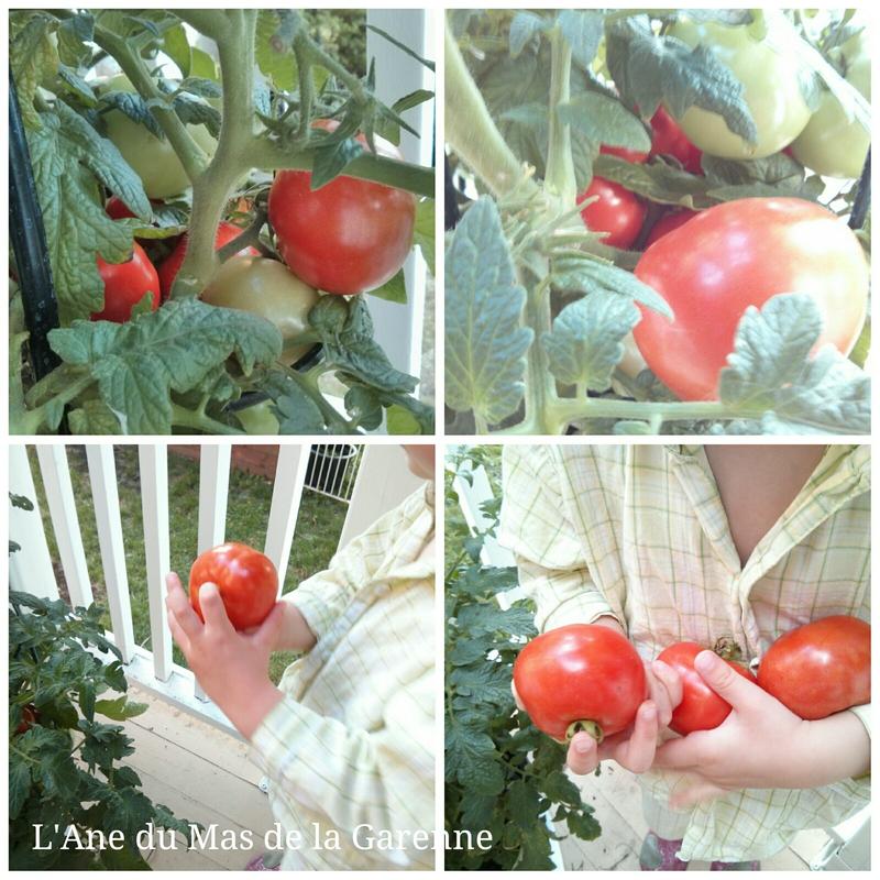2014_07_13_tomates1