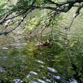 Glaswaldsee