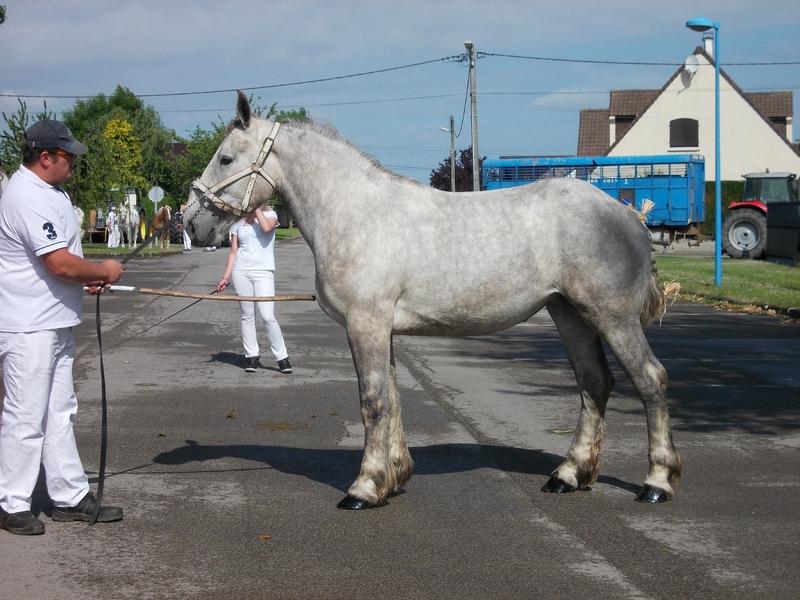 Daisy du Vivier - 18 Juin 2015 - Concours d'élevage local - Arneke