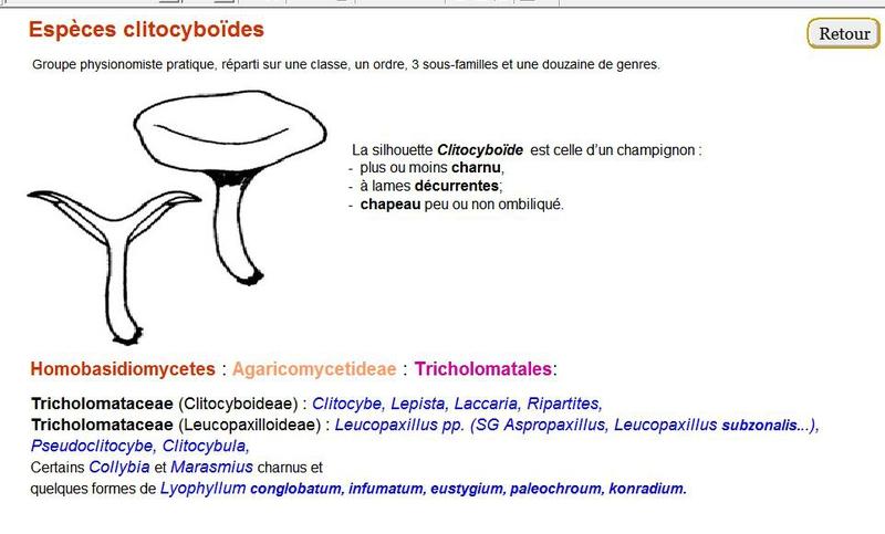 sil_clitocyboides