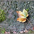 2014-10-17-P1310962