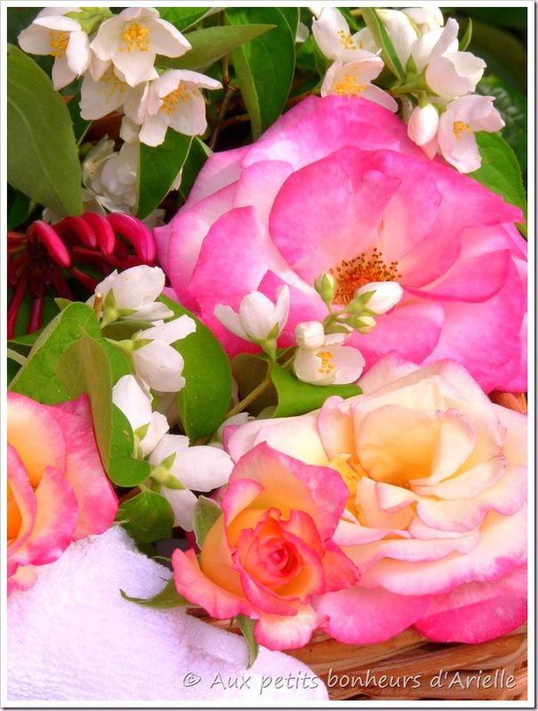 Eau de rose (9)