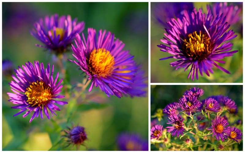 3asters