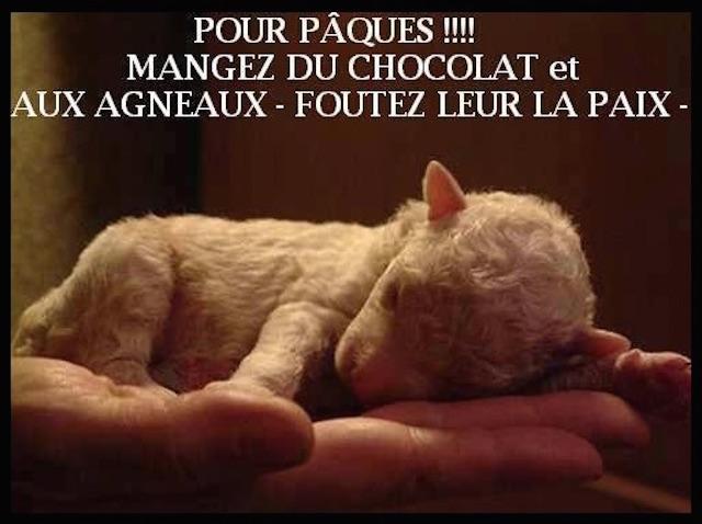 paques_agneau