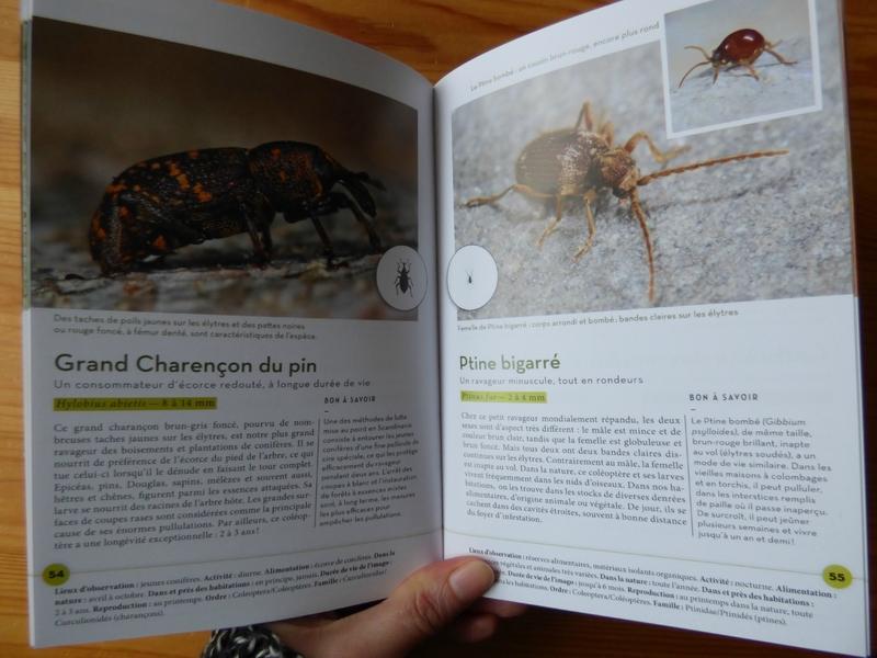 Les insectes familiers à la loupe (2)