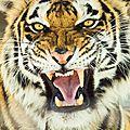 tigreuOKv1reae9uo1_1280