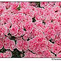 serres royales_laeken_2012-04-19--12