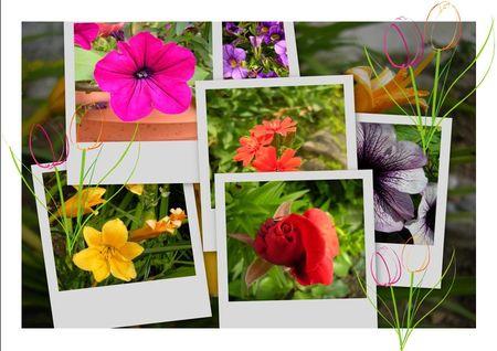 Essai_fleurs2