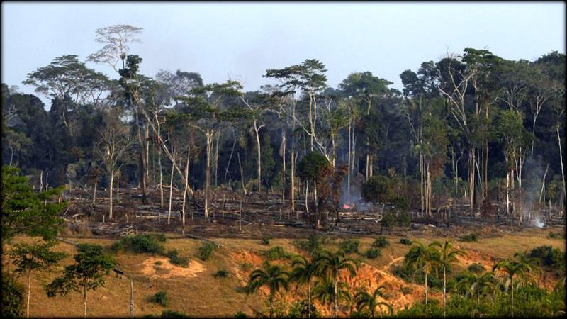deforestation_en_amazonie_4105170