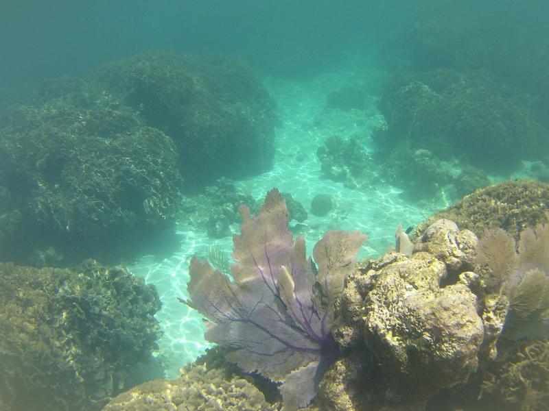 fond sous marin Utila (24)