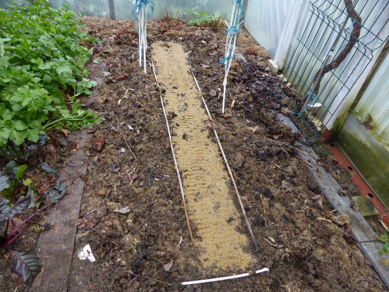 15-serre-semis radis, carottes, navets (3)
