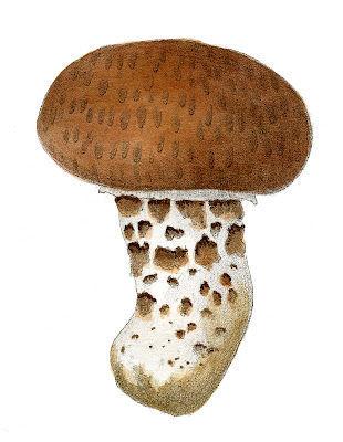 Mushroom_TanWt_GraphicsFairy4