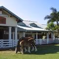 SW chevaux