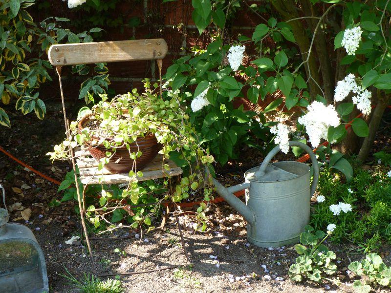 fleurs et jardin (34)