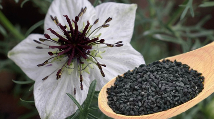 black-seed-nigella-sativa