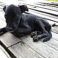 Petite chienne abandonnée sur un trottoir de pointe à pitre