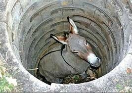 Ane au fond d'un puits