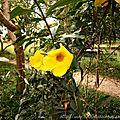 Quelques fleurs du congo