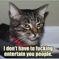 Cat sceptique
