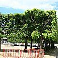 IMG_4456 Place d'Alliance en mai 2012