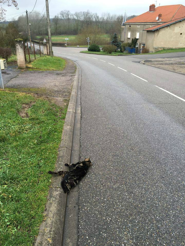 chat écrasé
