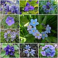 Windows-Live-Writer/db12ef7c4342_9F7A/fleurs bleues_thumb_1